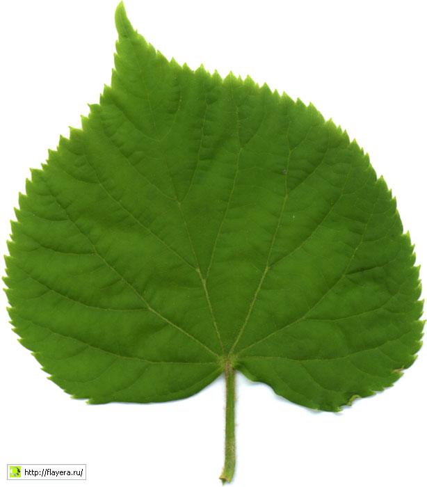 Основное отличие флаера от листовки – более плотная бумага, которая дольше сохраняет внешний вид флаера. Также плотная бумага придает флаеру презентабельный вид.