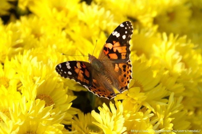 http://img0.liveinternet.ru/images/attach/c/0/38/571/38571381_PICT7240comp.jpg