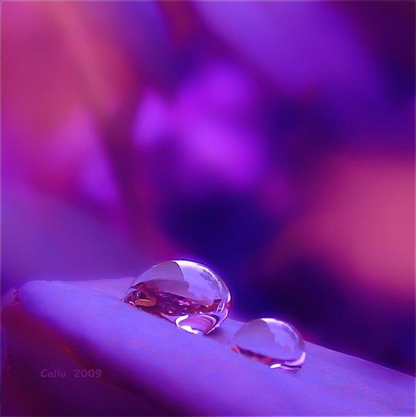 Purple_Light_by_Callu (600x602, 28Kb)