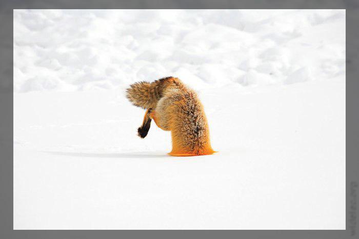 соски на снегу