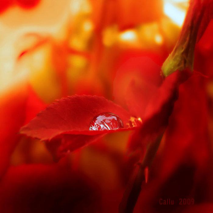 Scorillo_Blood_Red_by_Callu (700x700, 55Kb)