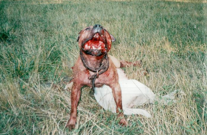 Собак со всего мира фото
