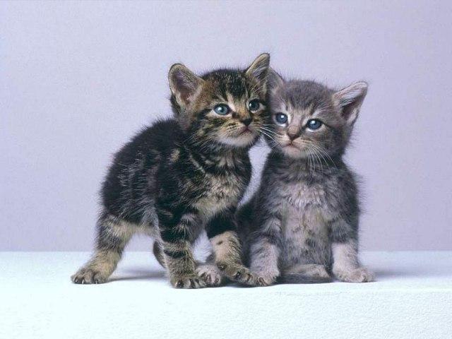 Если Вы не можете разрешить.  Коты, кошки, котята...Лучшие фото.