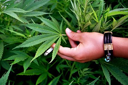 В Киеве нашли 700 грамм марихуаны