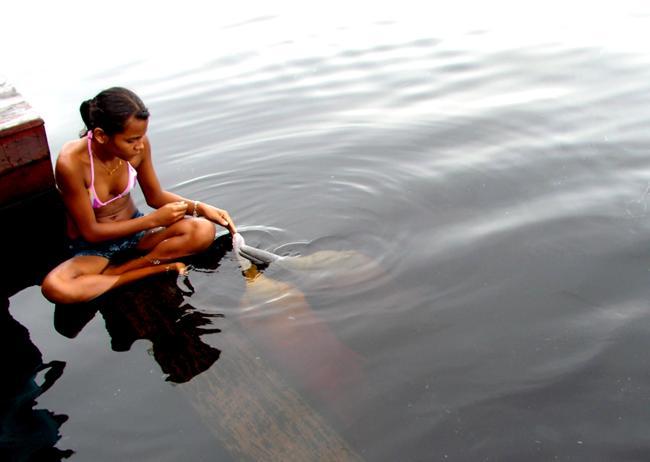 Речной, розовый дельфин (1 фото)