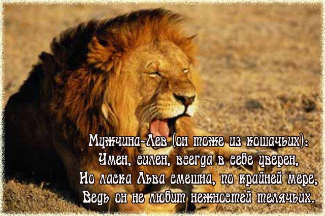 Фото цитаты львы
