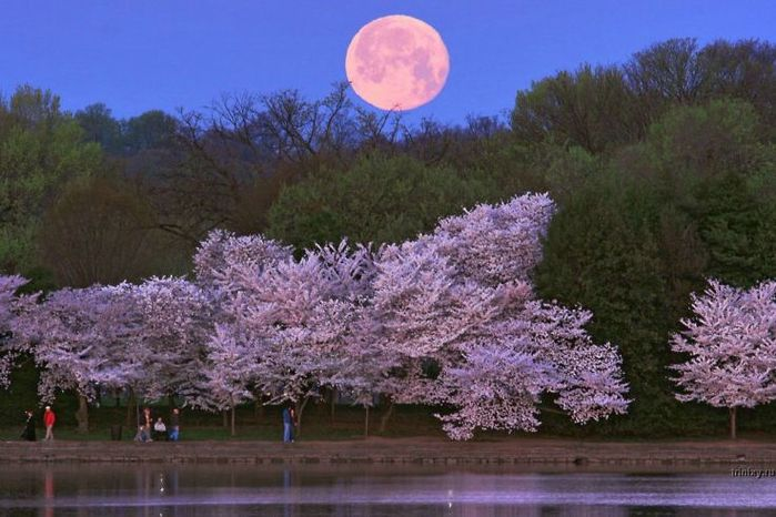 "Фотографии Луны ( 25 фото ) "" SwTeam.info"