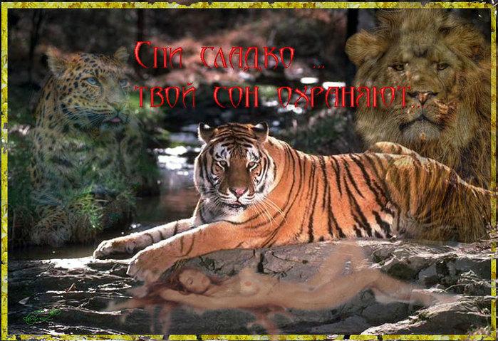 Открытка ты мой тигр 9