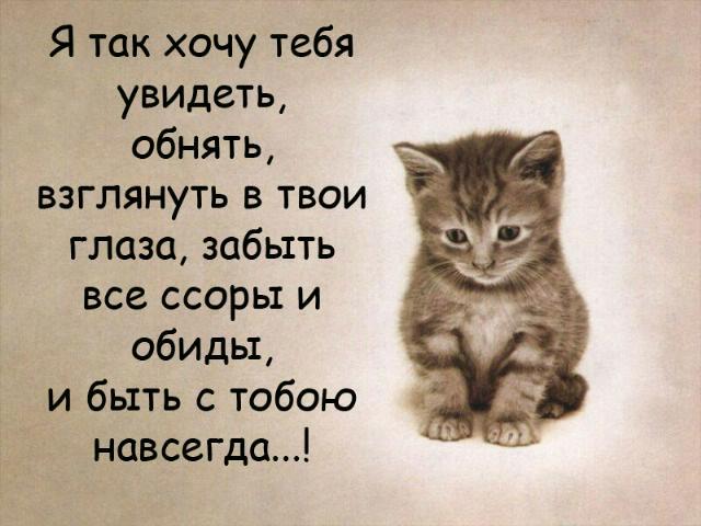 Стих я хотел бы быть котенком