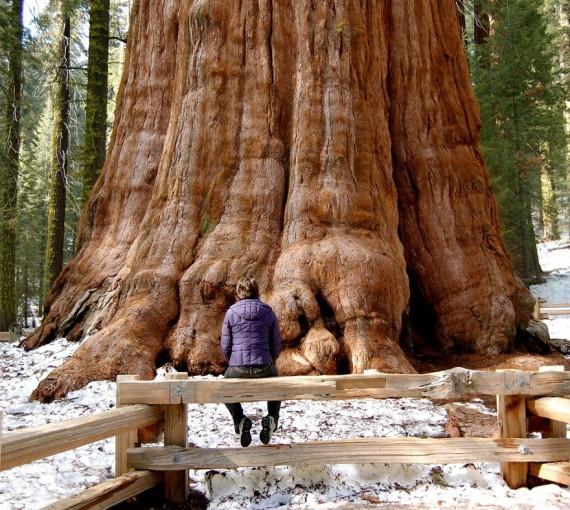 Картинки : Удивительные деревья (16 фото)