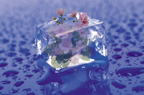 И тает лед и сердце тает