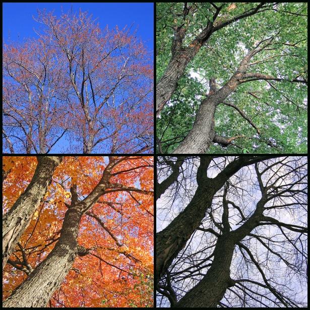 Зима весна лето осень в картинках