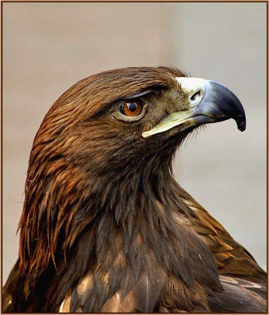 Орел Свободолюбивый, независимый, часто скрыто честолюбивый деймон-орел...