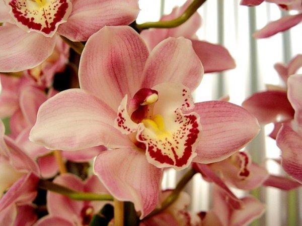 Орхидеи цветы не земные а подарок