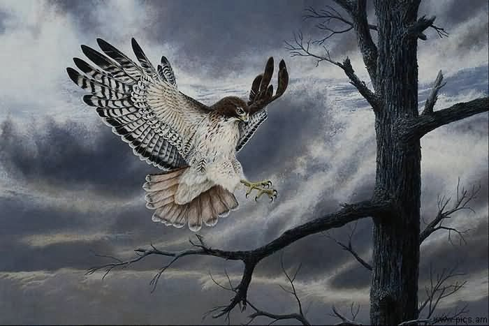 ...на фоне темного неба перед дождем Рисунки птиц Птицы Животные МИР ФОТО.