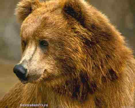 Сообщение от black_vile.  Сообщений: 16,247.  9812. Ну вот, нано-медведь Вася, добрый и любопытный желает с Вами...