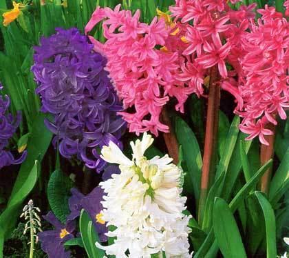Словно множество миниатюрных лилий было собрано в одно соцветие (султан), а на их лепестках было начертано горестное...