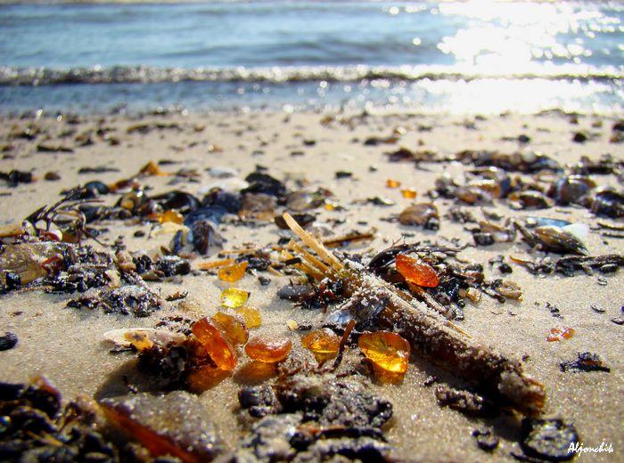 В Калининградской области пляж засыпало янтарем