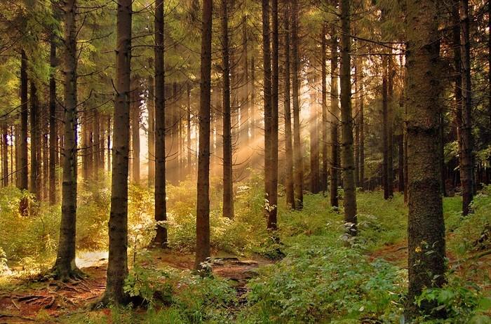 Окраины леса 44688145_1__2_