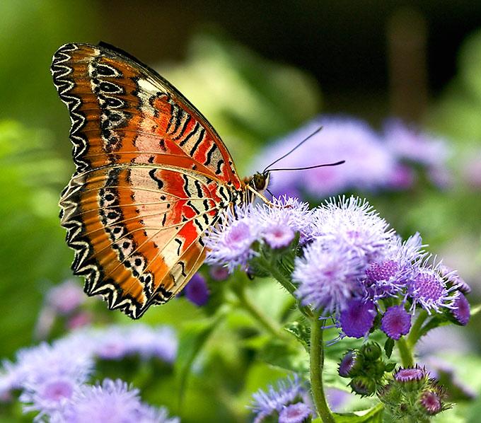 Поздравление с днем рождения бабочками