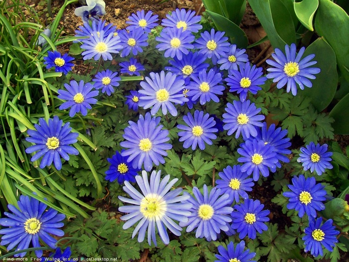 садовые цветы 2