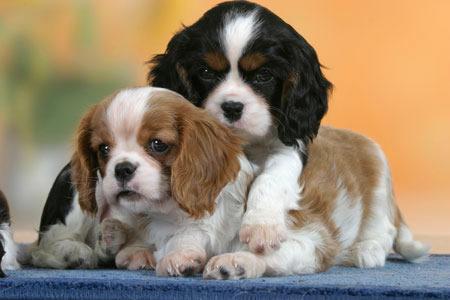 Сумки для собак большие