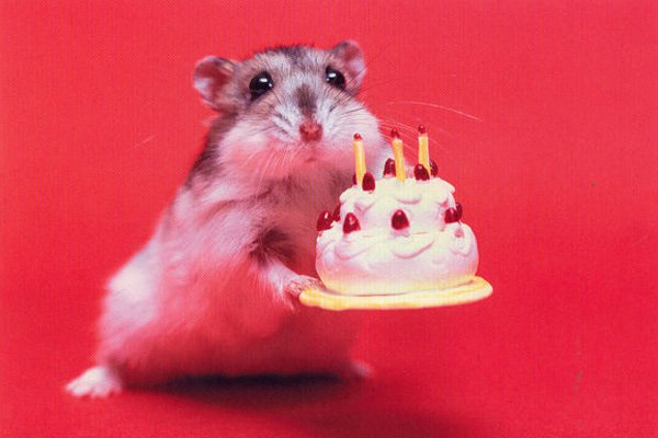 Happy birthday cute animal