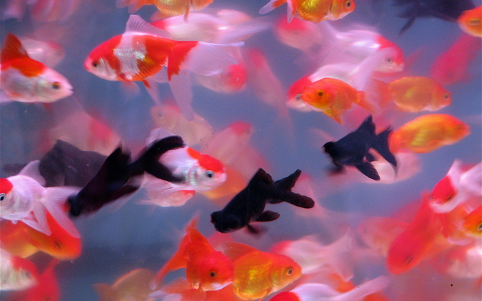 Как будто рыбы проглотили солнце.  И, кажется, с тех пор они молчат.
