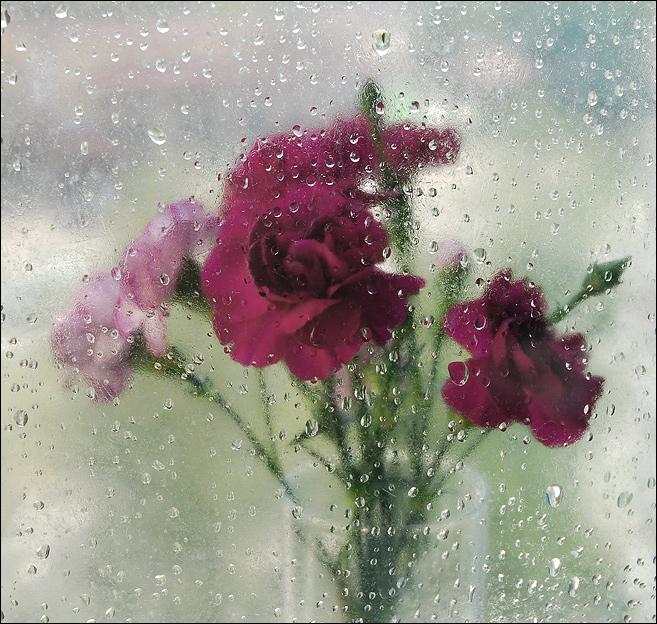 Фото цветов за стеклом