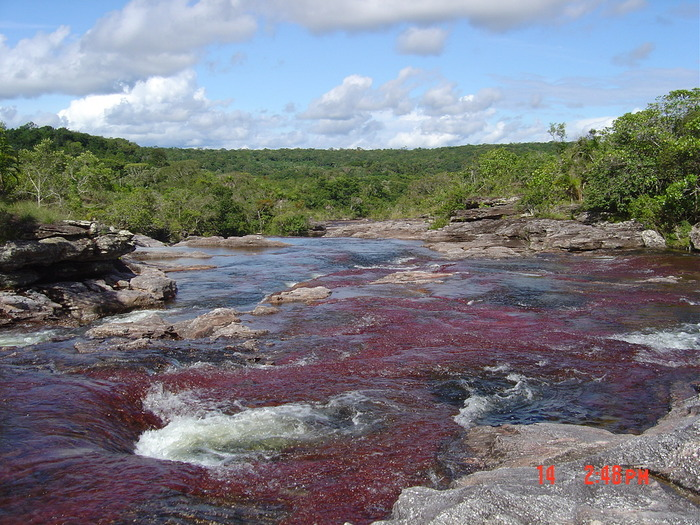 Окраска реки обусловлена наличием