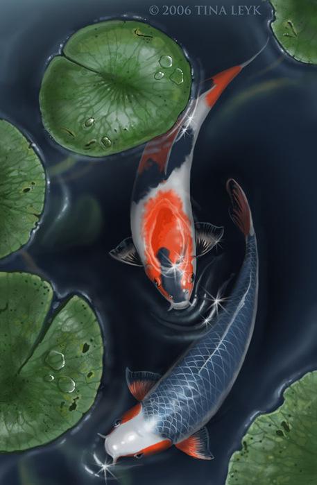 Кои считается рыба прошедшая 6