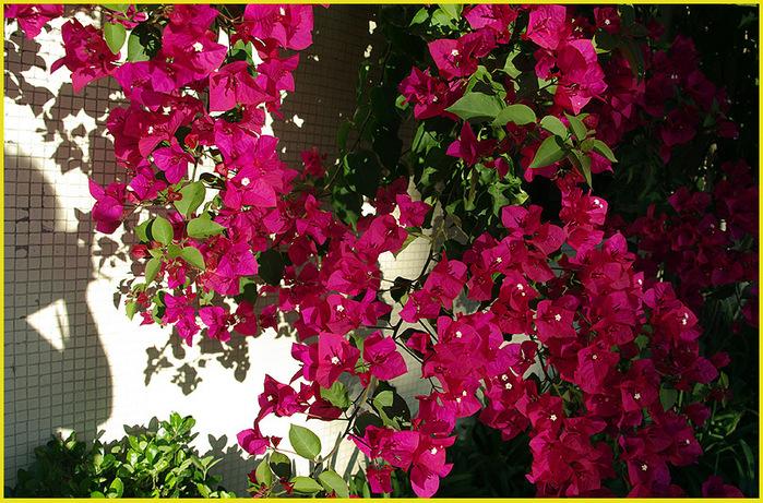 Цветы португалии самое интересное в