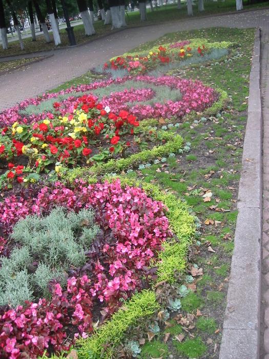 Садовые цветы ярославль