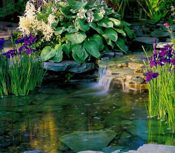 Формальные и свободные пруды.  Оформление декоративных водоемов.