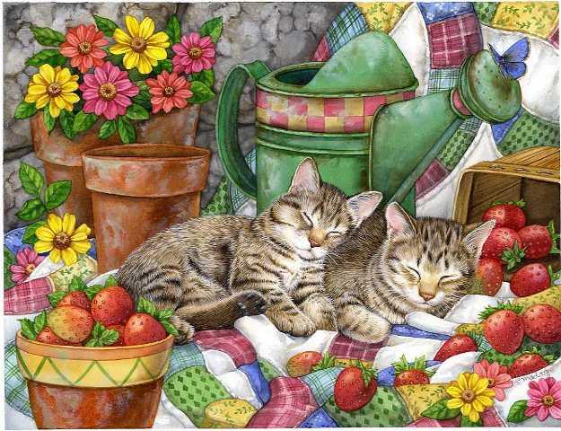 Скачать обои животные, спящие кошки, Jane Maday 800x600.