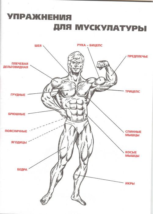 Анатомия и схемы упражнений ч.1.