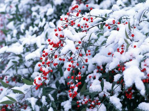 http://img0.liveinternet.ru/images/attach/c/0/51/604/51604111_5080036_fsnow.jpg