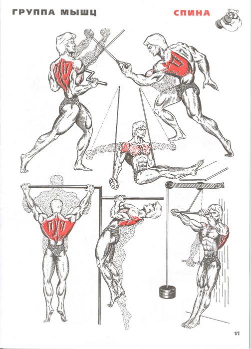 Упражнения для накачки мышц спины в домашних условиях - Solbatt.ru