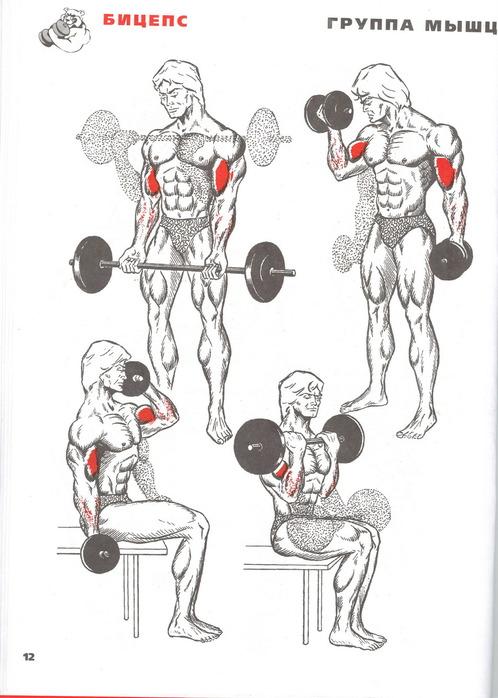 Правильно качаем мускулы.