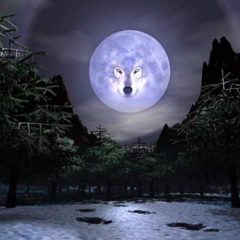 """...моих теперешних словах:  """"Ты Волком стань И помоги, таким Волкам как Я """""""