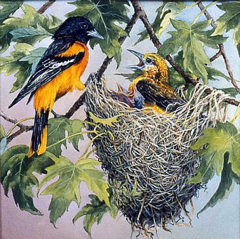 Variant 2, птицы, pticy.
