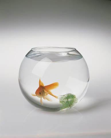 Отдам небольшой круглый аквариум с