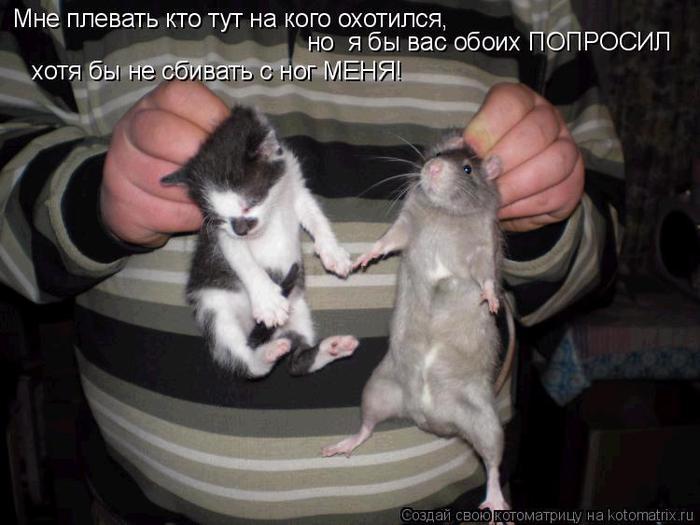 том ловит мышей