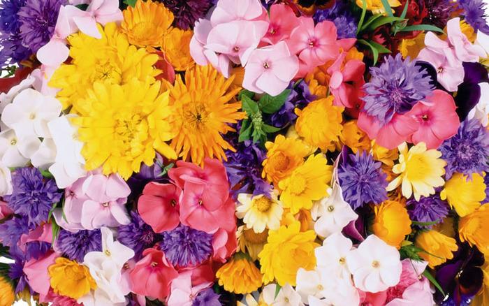 выбрать цветок 4