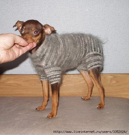 Вязание-одежда для собачек с описанием. http://homyakov.net.  Вышивка и другие виды рукоделия. http...