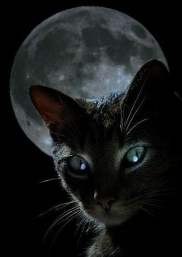 ...черную кошку, На оранжевой круглой...