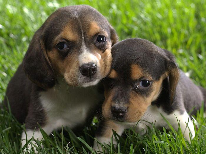 Скачать картинку Животные, Собаки в телефон бесплатно.