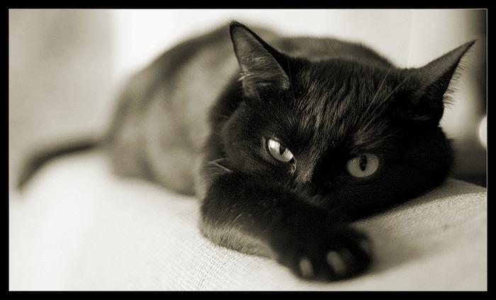 Стихи о кошках 53674240_0_11fc_75c4fb16_XL