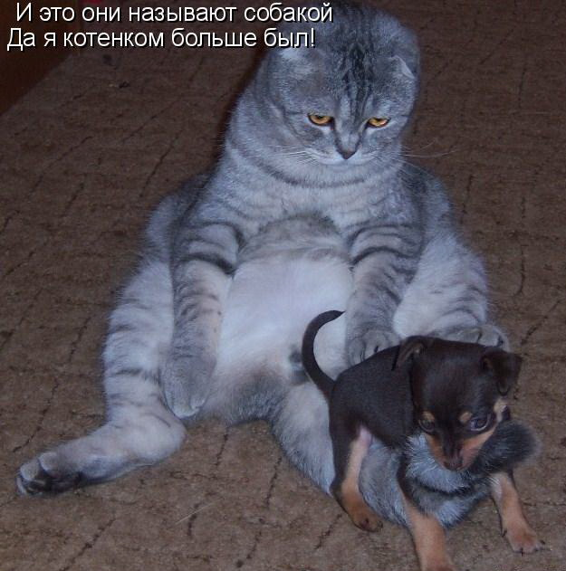 http://img0.liveinternet.ru/images/attach/c/0/63/109/63109941_008.jpg