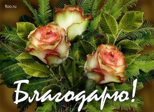 42962832_blagodaryu (500x363, 53Kb)